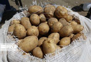 کشاورز سیبزمینی را ۱۶۰۰ تومان میفروشد