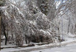 برف و باران تا فردا ادامه دارد