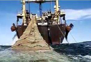 فیلم   خیانتی که به ذخایر دریایی ایران شد
