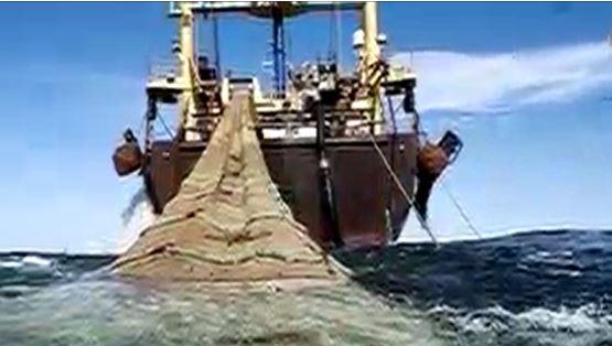 فیلم | خیانتی که به ذخایر دریایی ایران شد