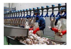 یک ماه نه مرغ بخرید، نه مرغ بخورید