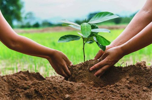 در روز درختکاری نهال نکاریم!