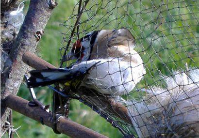 تلههای شکار کابوس پرندگان مهاجر