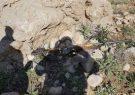 ۴ شکارچی غیرمجاز بازداشت شدند