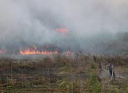 فیلم   آتش سوزی در تالاب انزلی
