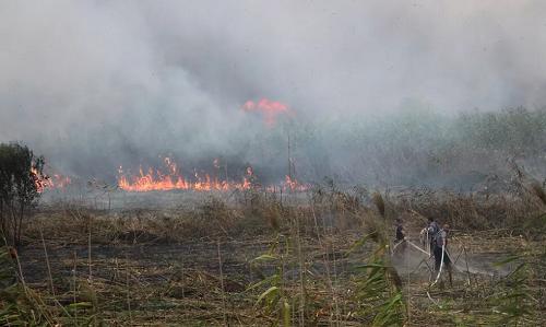 فیلم | آتش سوزی در تالاب انزلی